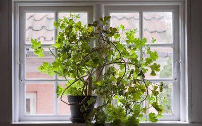 Window Film Kills Houseplants & Other Window Film Myths